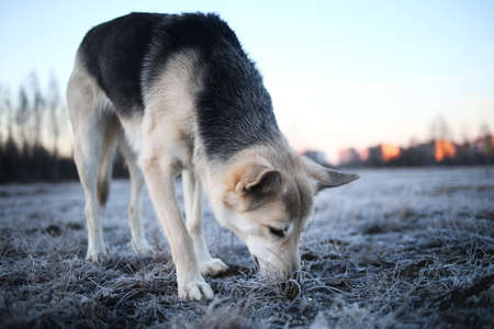 Portrait of a cute mixed breed dog at walk in winter at dawn before sunrise Imagens