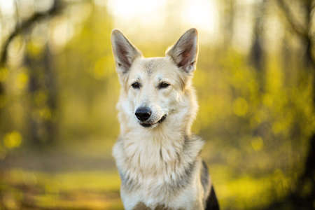 Friendly shepherd dog with big ears sitting on grass with green plants on blurred background