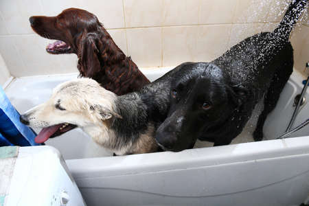 Crop caring man embracing three adult black and brown Shepherd and red Irish Setter dogs while carrying out hygiene procedures in bathroom after walk at home
