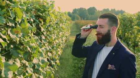 Man on vineyard with special instrument. Side view of elegant bearded man using refractometer standing on green vineyard and checking sugar of grapes