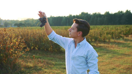 Man testing ripening of grapes. Side view of young man in shirt holding bunch of grapes and exploring its quality in nature Stockfoto