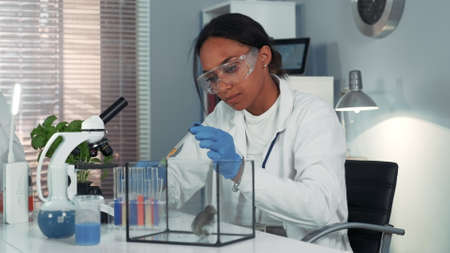 Mixed race research scientist providing experiment with lab mouse by giving it some doze of medicine. Woman is in safety glasses working in bright chemistry laboratory.