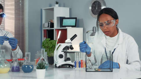 Female research scientist in safety glasses providing experiment with mouse and then showing her amazement after observing animal behavior in chemistry lab