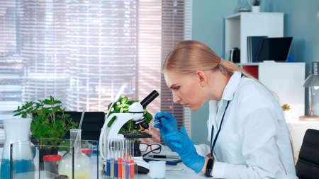 Female research scientist dropping sample on microscope slide and examining it working in modern bright chemistry lab