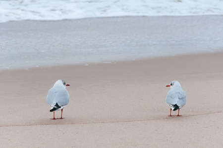 reciprocity: Two seagulls watching at each other on a beach  Stock Photo