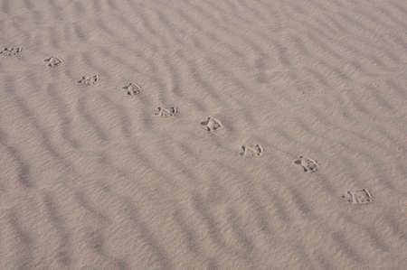 Bird s trail on sand  Stock Photo - 17217638