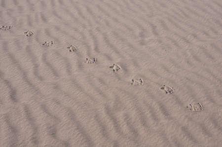 Bird s trail on sand Stock Photo - 17217638