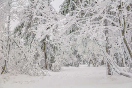 frostily: Winter view on a forest road Stock Photo