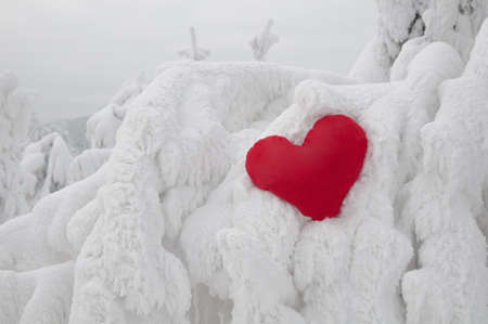 A lonely heart on w frosty winter weather photo