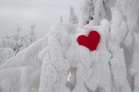 A lonely heart on snow photo