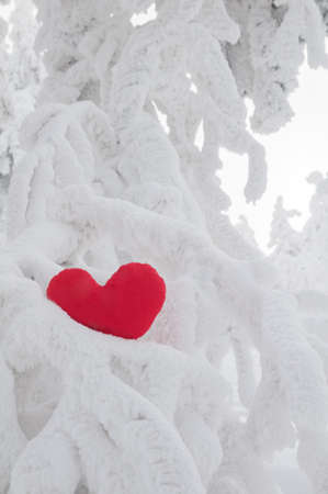 A lonely heart on snow