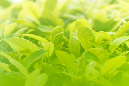 grown up business background concept. closeup natural leaf green or plant in garden.