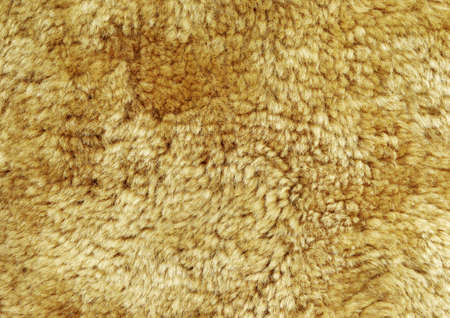Natural beige sheep fur background texture.   Stock Photo