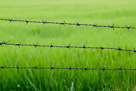 Barbed wire with rice background after raining photo