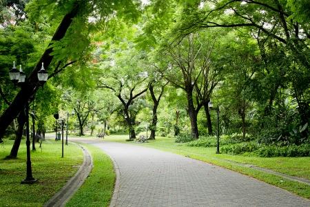 緑豊かな公園で石の経路