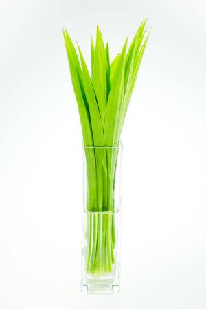 tectorius: Pandanus leaves Stock Photo