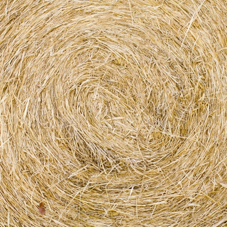 hayloft: Straw texture background, close up