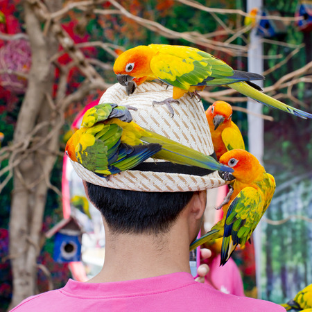 A man with a lot of birds on the head