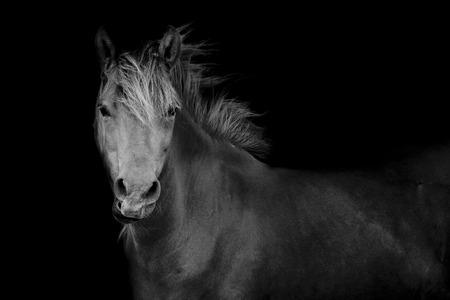 caballo corriendo: Volver foto de un caballo Foto de archivo