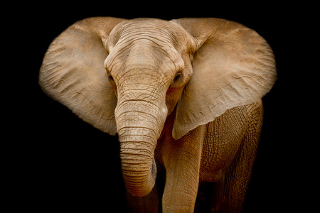 Elephant Zdjęcie Seryjne