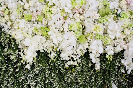 Weiße Blumen Auf Einem Weißen Hintergrund Lizenzfreie Fotos, Bilder ...