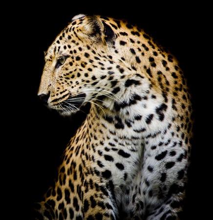 Seite Leopard Lizenzfreie Bilder