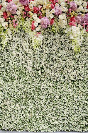 wedding backdrop: Colorful flowers with green wall for wedding backdrop