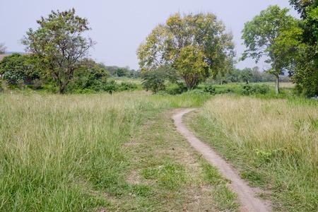 Trail passing through dense grasses photo