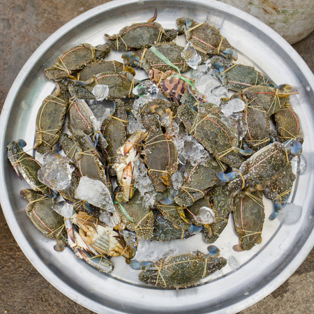 blue swimmer crab: Raw blue crab - ready to sell in market.