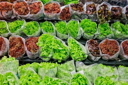 lettuces: fresh lettuces in supermarket