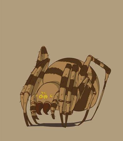 latrodectus: Spider Vector