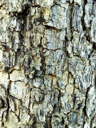 colour: Wood texture Stock Photo