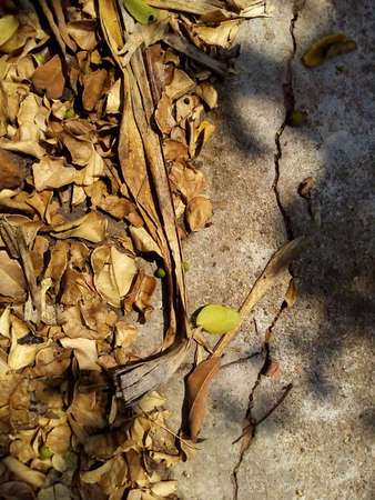 Closeup dry leaved on ground