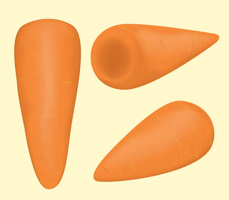 vegetable Carrot. food healthy and natural organic vector and illustration