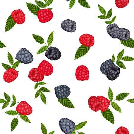 Seamless pattern, vector background blackberries and raspberries Illustration