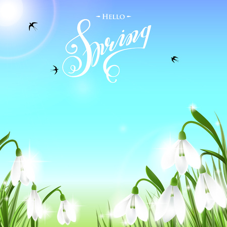Spring background with snowdrop flowers, green grass, swallows and blue sky.