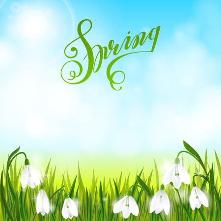 Spring background with galanthus snowdrop flowers, green grass, swallows, lettering Spring and blue sky. Can be used for Easter, birthday, wedding, anniversary, 8 march, womans day. Seasonal sales.