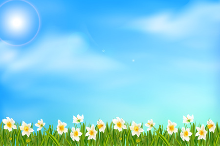 Spring background with daffodil narcissus flowers, green grass, swallows and blue sky.