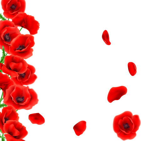 Greeting card Poppies flowers. Stock Photo