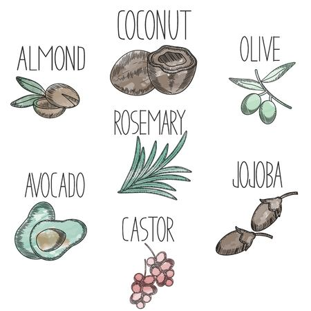 Set of medicinal plants and fruits avocado,castor,jojoba,olive,coconut,almond,rosemary in sketchy watercolor style. Icons for medical and beauty products logo,flyer,banner,branding . Vector cosmetic Illustration