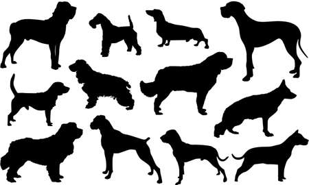 Silhouette Cani Stock Vector - 12753419