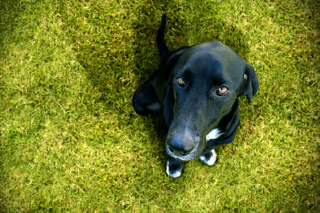 obedient: Obedient dog looking up Stock Photo