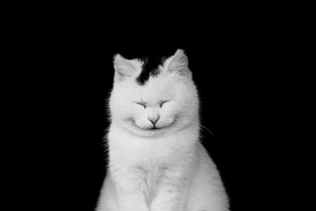 White cat smiling Stock Photo - 19492091