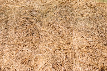 Golden hay background hay