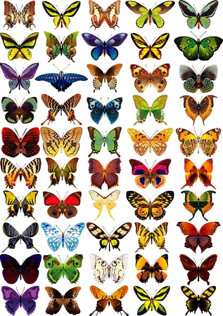 Establecer diferentes mariposas multicolores - vector