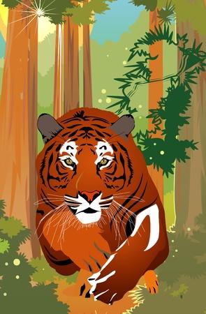 silueta tigre: Vector de tigre