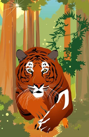 bengal: Vector tiger Illustration