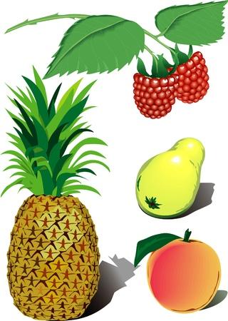 watermelon juice: Set of vector fruits