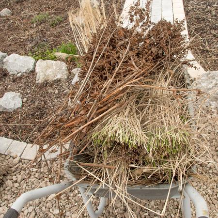 garden waste: Pruning of garden plants Stock Photo