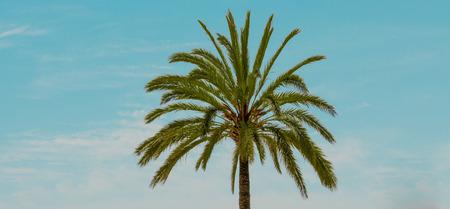 palmtrees: Palm tree under blue sky Stock Photo